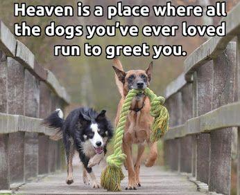 Dogs - Community - Google+