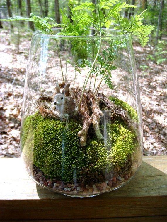 Vase Terrarium Rabbits Foot Fern Moss Terrariums By