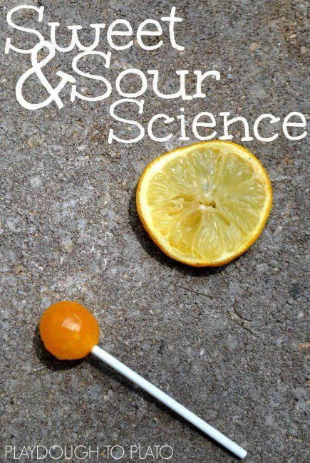 Simple backyard science for kids. Do ants prefer sweet or sour?