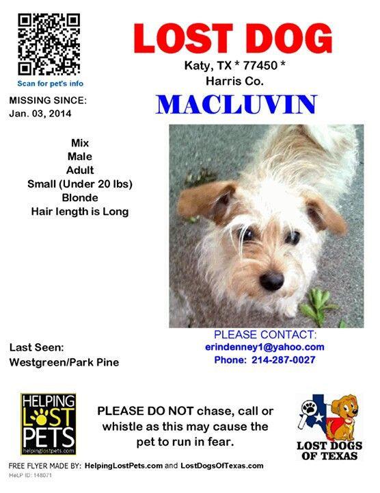 Lostdog Ldot Katy Tx Male Terrier Named Macluvin Missing From