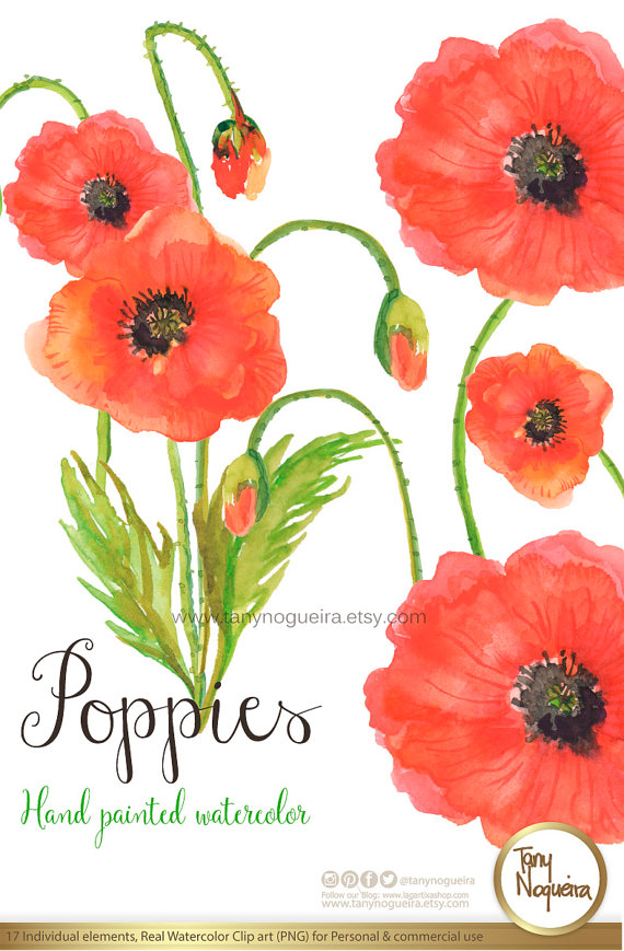 Poppies Watercolor Floral Wedding Elements Clipart PNG Blue Flowers Spring Rustic