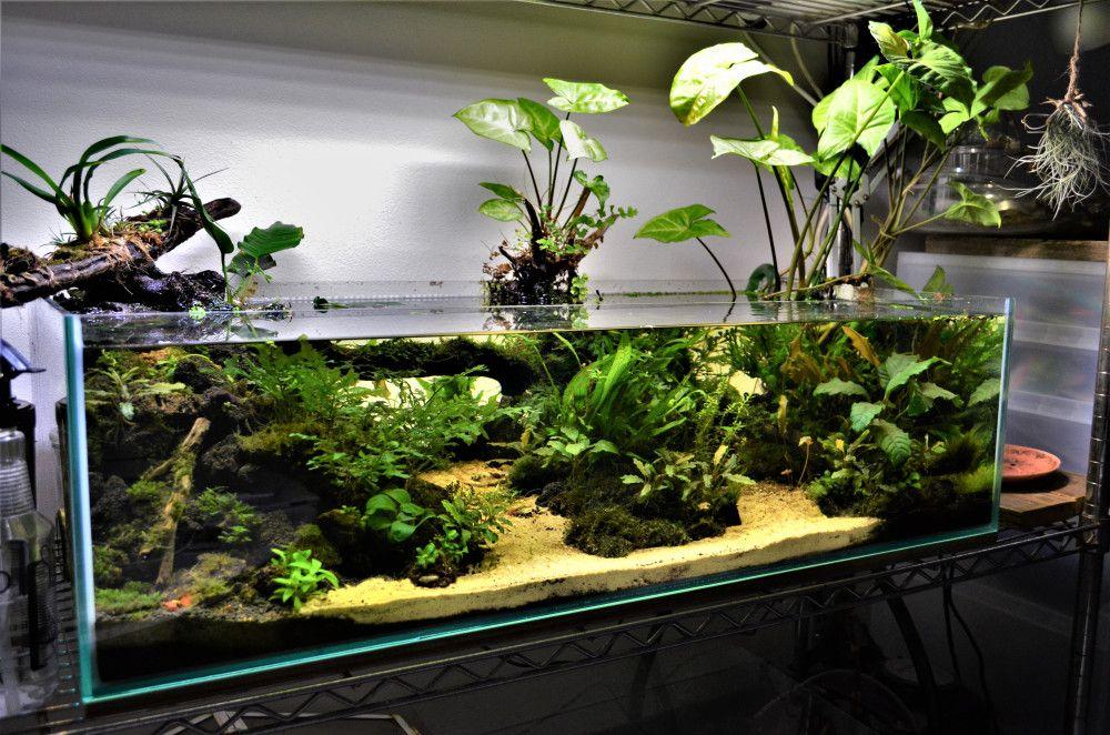 100 Aquarium Ideas In 2020 Aquarium Aquascape Aquarium Aquarium Design