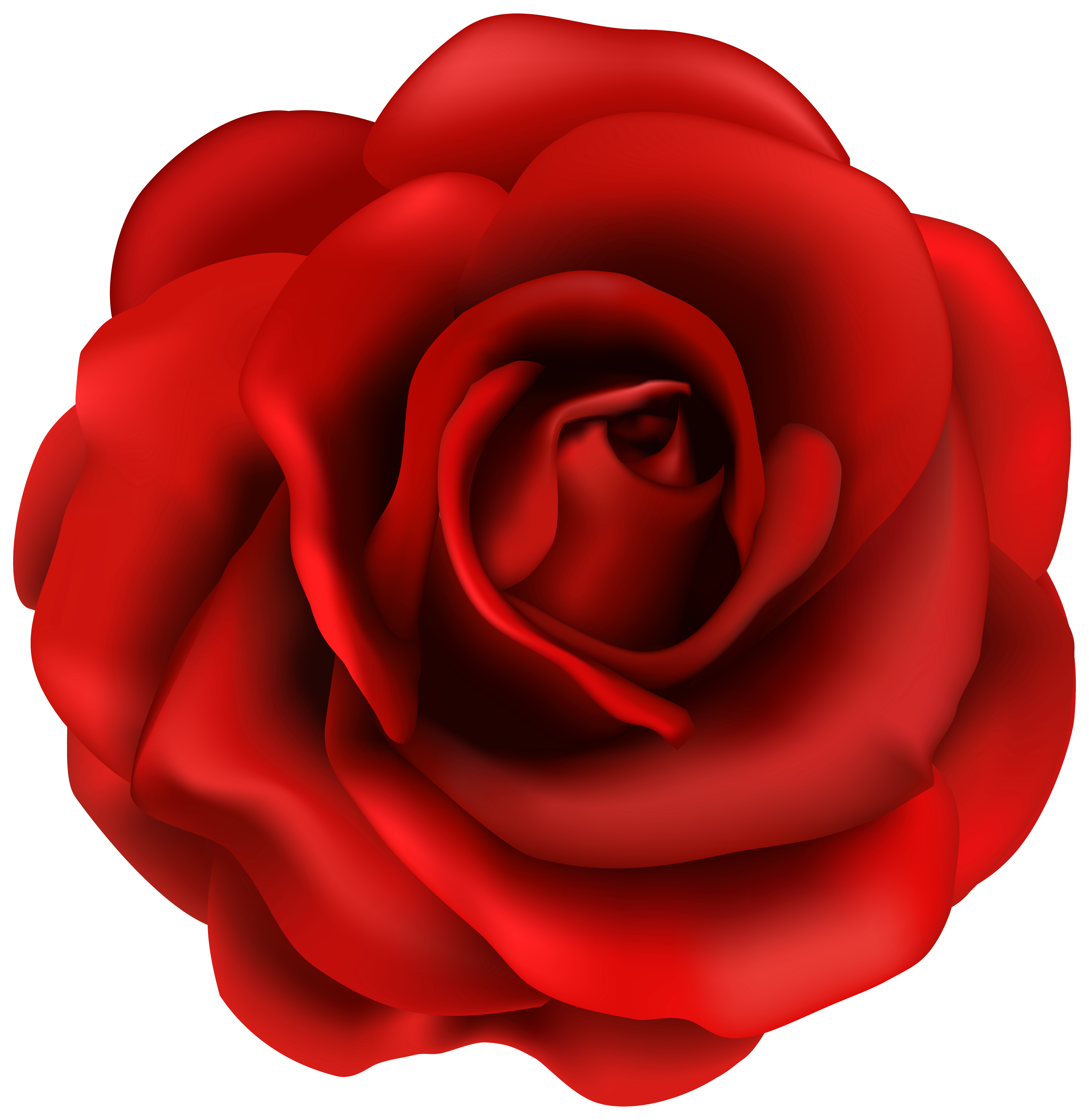 Red rose flower clipart image Rose flower png, Red rose