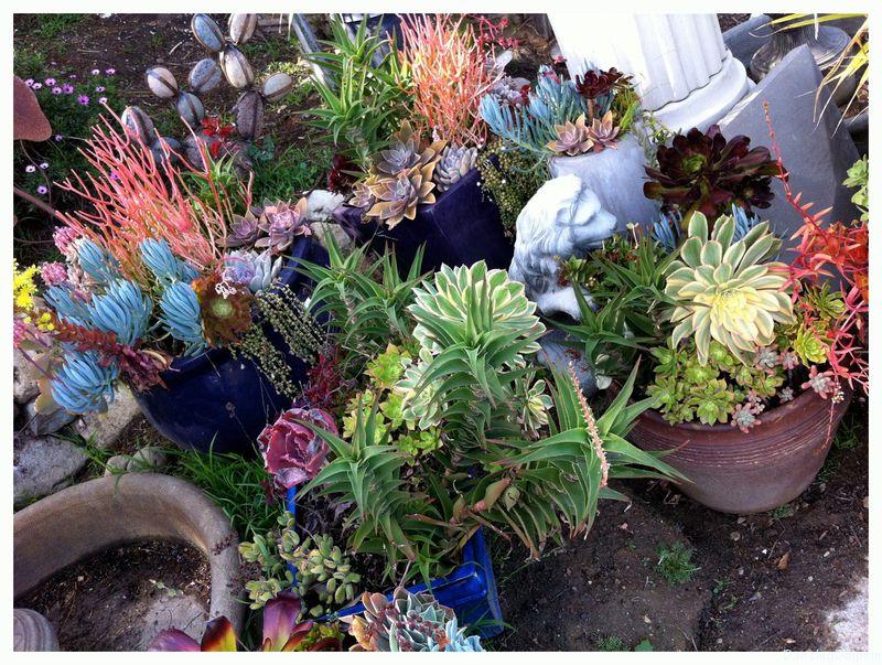 Stevens Gardens Nursery San Juan Capistrano Http Www Yelp