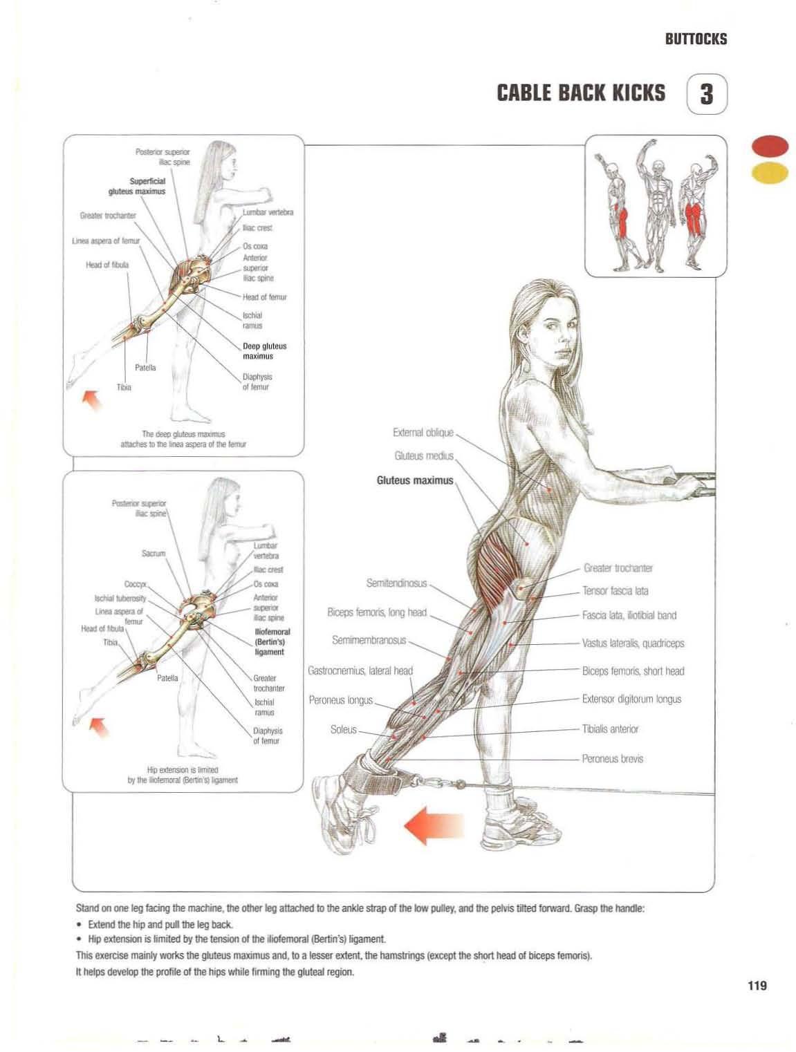 Strength training anatomy 3. Cable Back Kicks Bigger/bubble butt ...