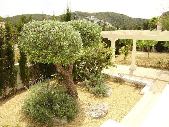 olivos en jardines