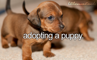 I can get puppies, I just want to adopt one from a humane