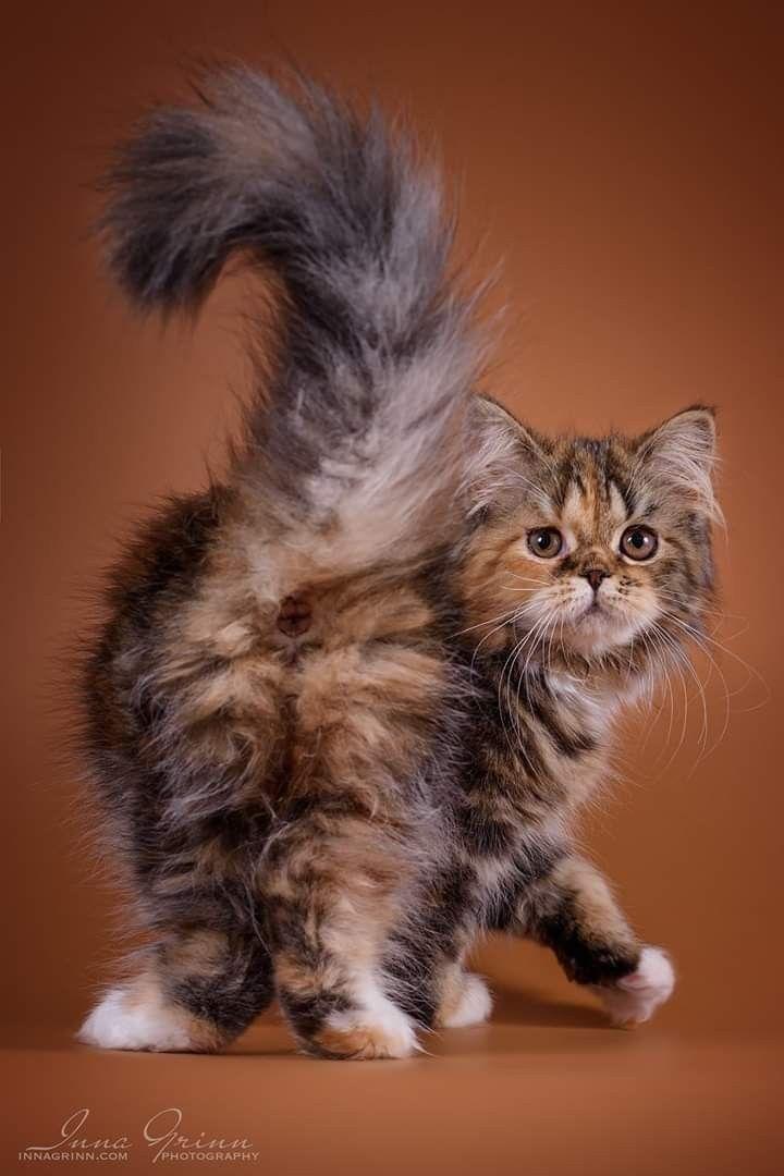Nebraska 3 Months Cute Cats Photos Pretty Cats Funny Cat Images