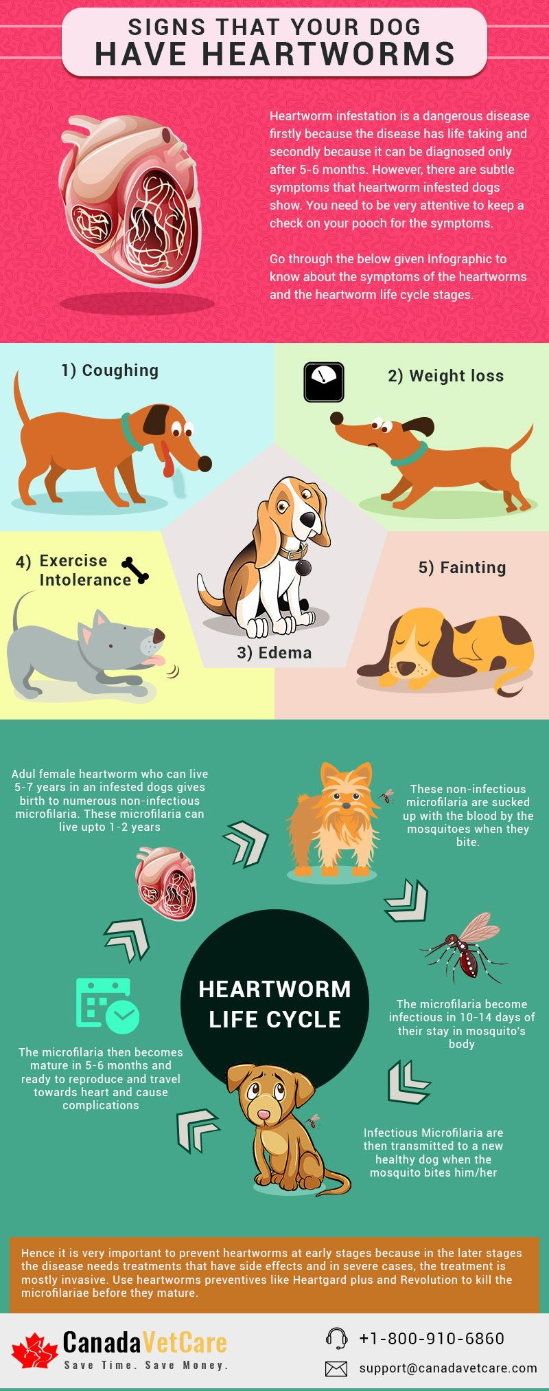 5 Signs That Indicate Your Dog Has Heartworms Infographic In 2020 Heartworm Your Dog Dog Infographic