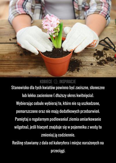 Stanowisko Dla Tych Kwiatow Powinno Byc Zaciszne Sloneczne Lub Lekko Zacienione Dluzszy Okres Kwitniecia Wybierajac Cebule Wybieraj Te Ktore Plants Garden
