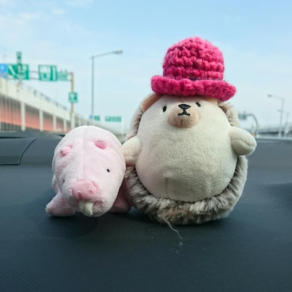 外環道開通嬉しいなぁ 関越道追突事故渋滞 #オイラはお留守番 #車の運転は気を付けよう #ハリネズミ  #ハダカデバネズミ  #hedgehog