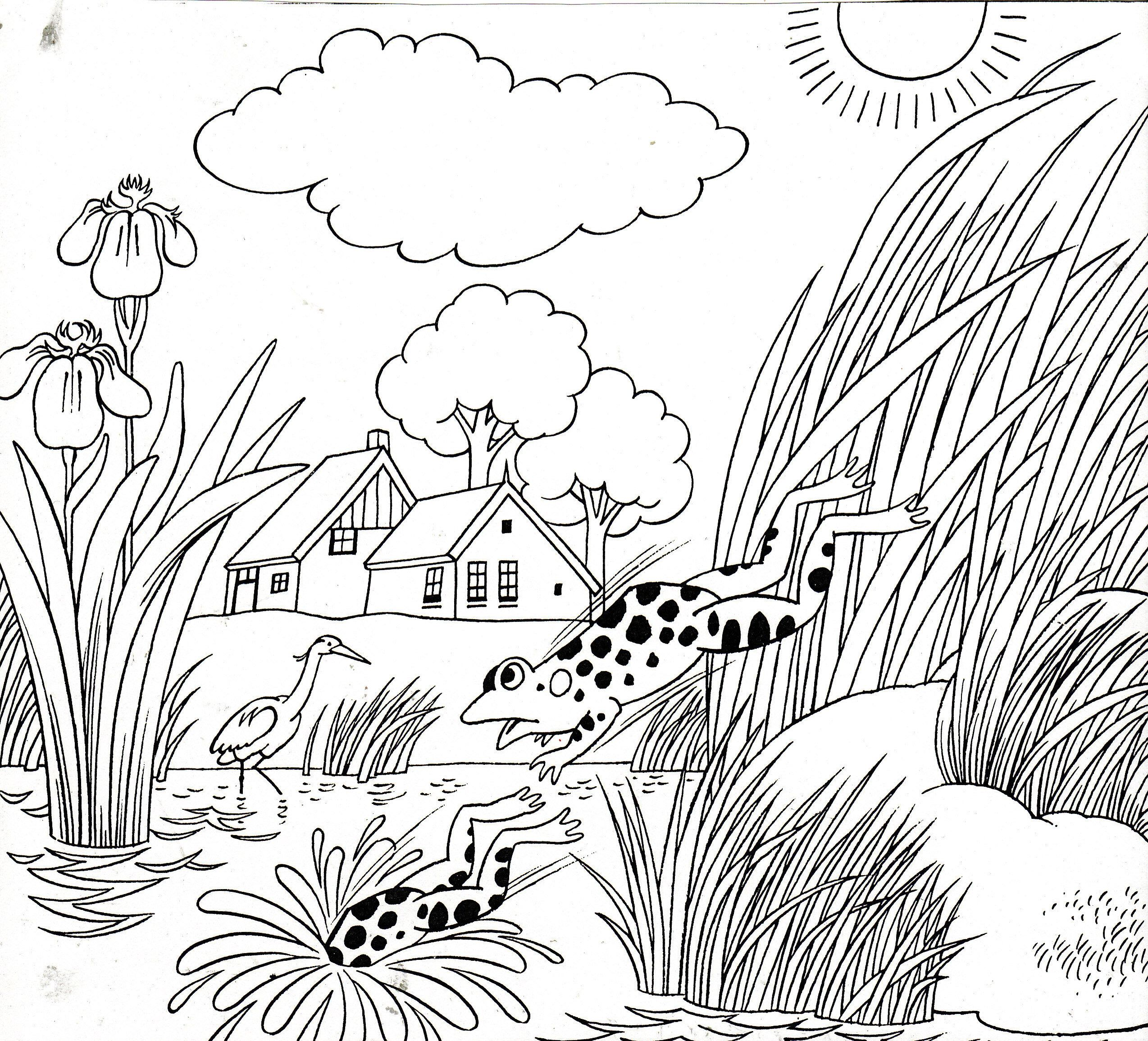 Kikkers Frogs Butterfly Coloring Page Colorful Butterflies Coloring Pages