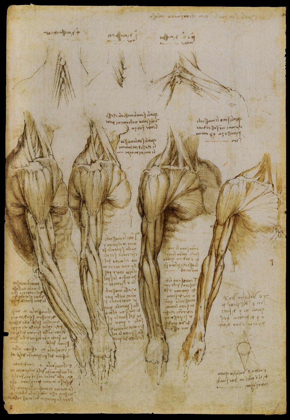 Leonardo | Leonardo da Vinci. | Pinterest | Arte