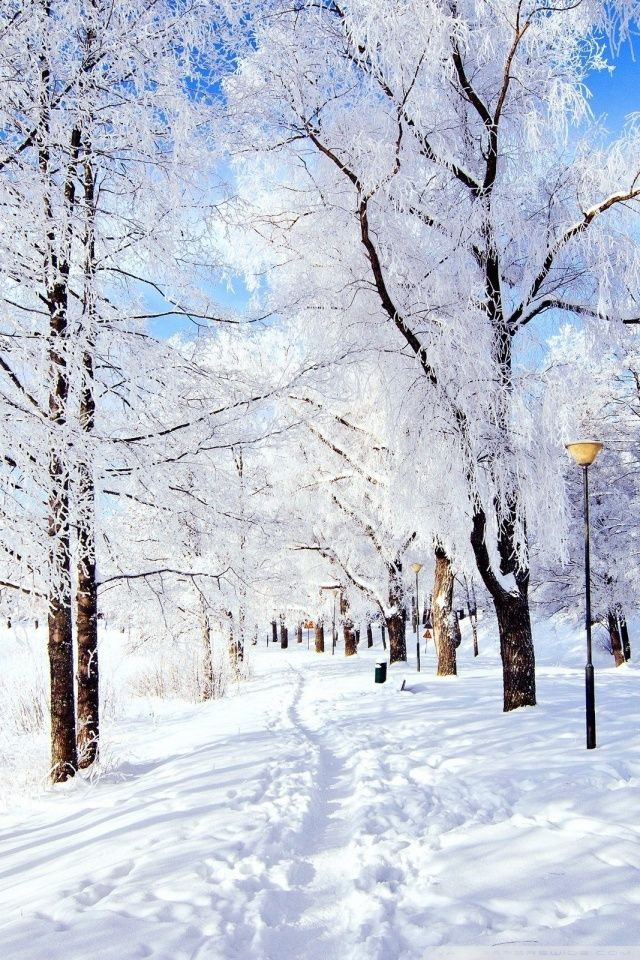 Winter Wonderland Hd Desktop Wallpaper High Definition