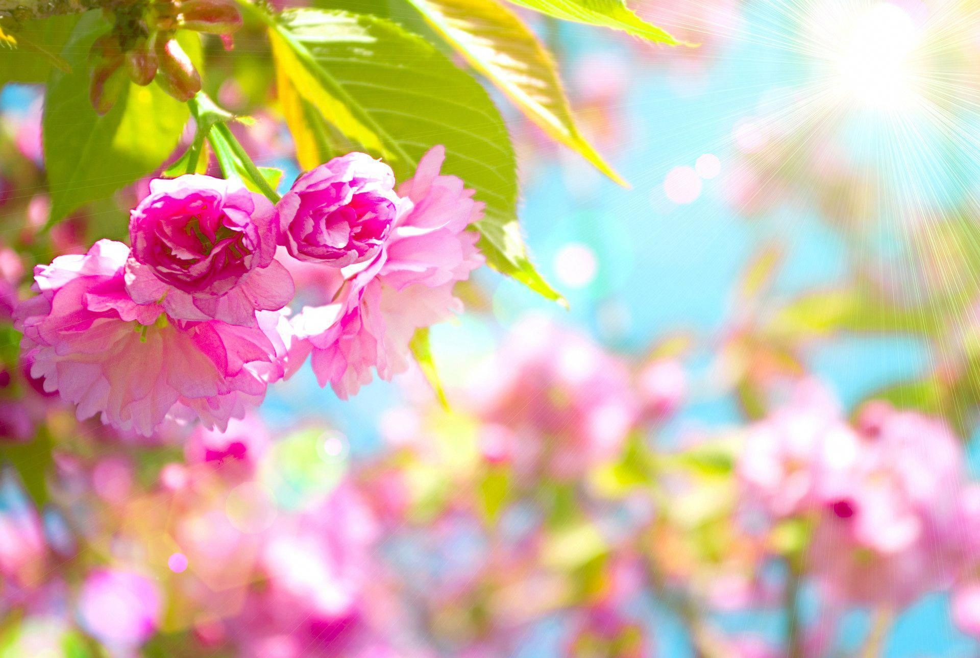 1920x1289 Free Spring Desktop Wallpaper Spring 79 Free Wallpapers Free Desktop Wallpapers Spring Desktop Wallpaper Spring Wallpaper Free Spring Wallpaper