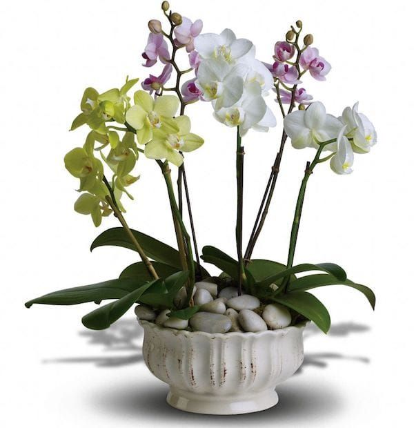 12 Housewarming Party Gifts With Special Meaning Partyideapros Com Orchid Flower Arrangements Orchid Plants Dendrobium Orchids Care