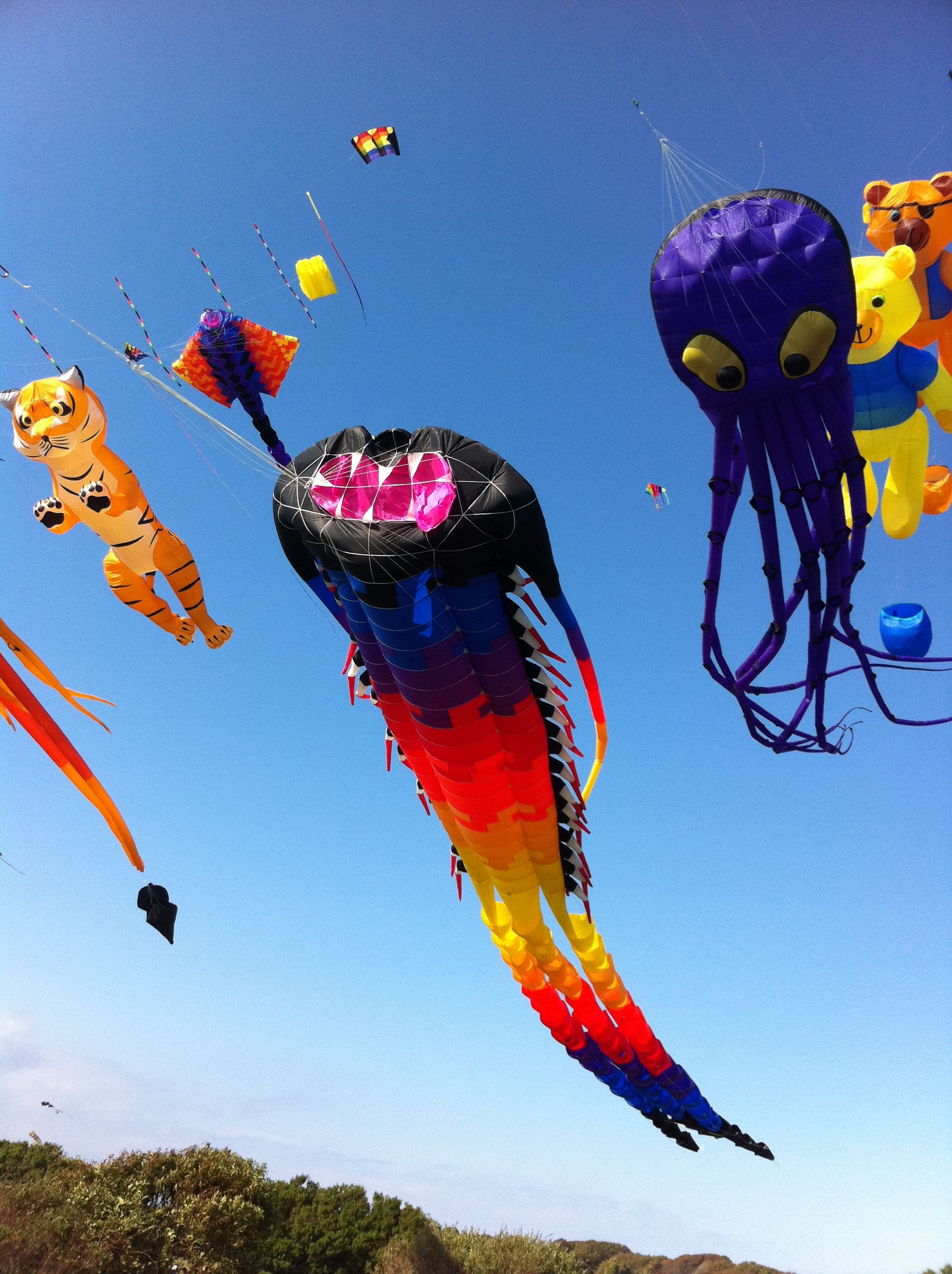 Brenton Point Kites What A Variety Of Large Kites And