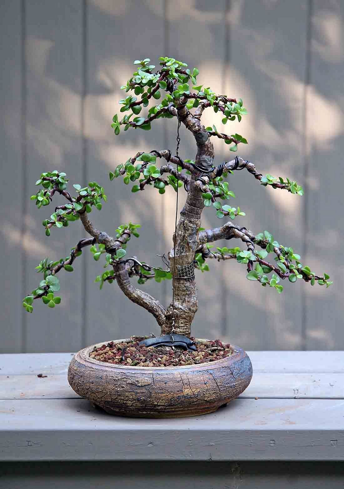 12 Incredible Bonsai Plant Ideas as Your Garden Home
