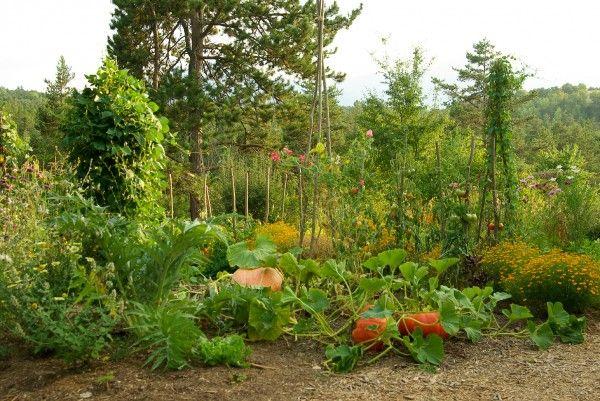 le site de la survie autonomie bushcraft potager kitchen garden permaculture garden. Black Bedroom Furniture Sets. Home Design Ideas