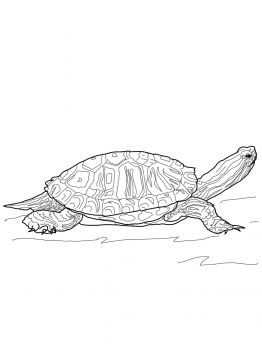 17++ Supercoloring turtle ideas in 2021