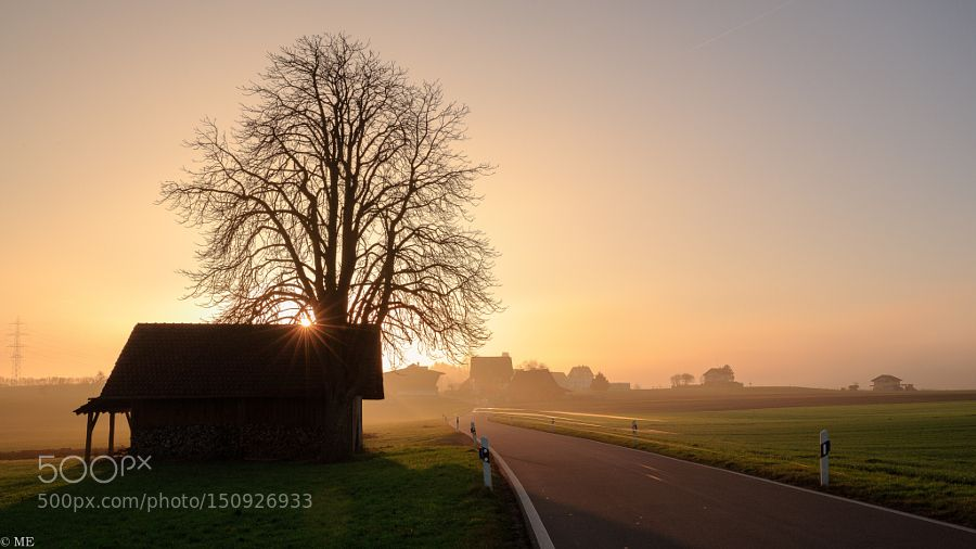 Drive into the sun by MatEngel Nature Photography #InfluentialLime
