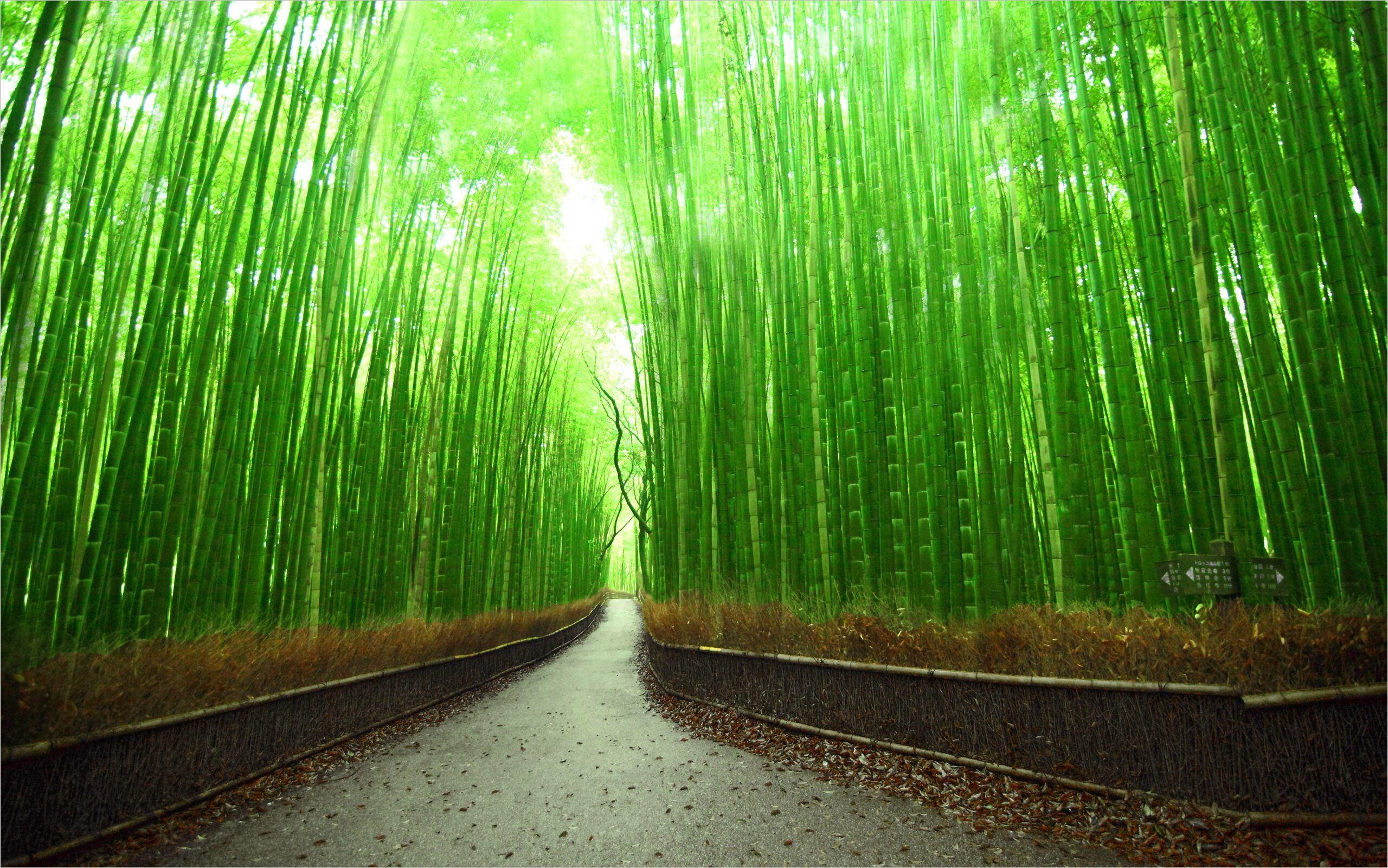 Bamboo Forest Wallpaper 4k In 2020 Beautiful Places In Japan Most Beautiful Places Beautiful Places