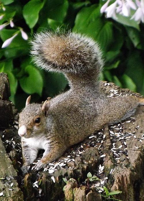 Wildlife Squirrel Greeting Card