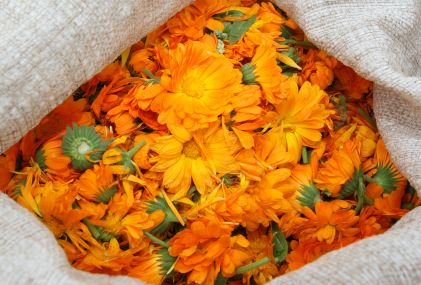 Yellow Ointment | Herbal Legacy Articles