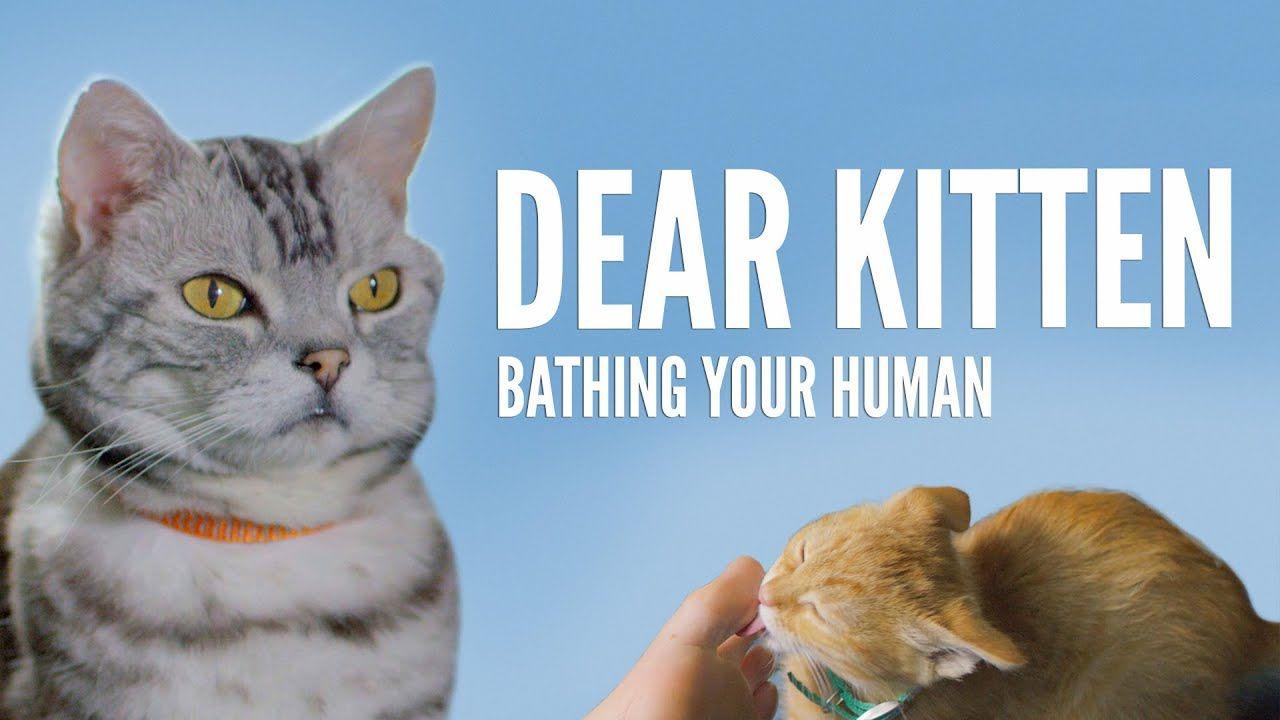 Dear Kitten Bathing Your Human Kittens Funny Kitten Cats