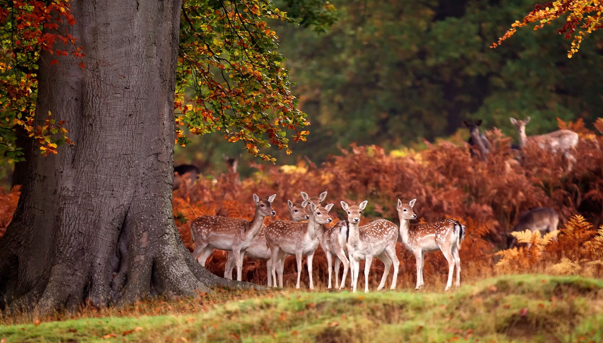 30 Awesome Animals Out And About This Autumn Deer Wallpaper Deer Photography Autumn Animals