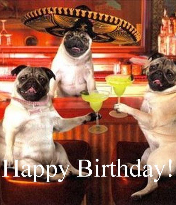 Birthday Greetings Funny Happy Birthday Pug Birthday Wishes Funny