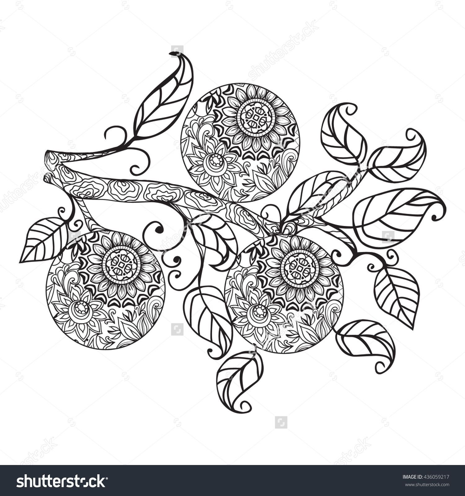 Vector Citrus Fruit Orange Food And Leaves Hand Drawn In Black White Outline