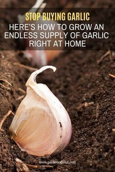 ec58fd7cd0acb858dfa5a357c68f7d6c - How To Get Rid Of Garlic Smell In Container