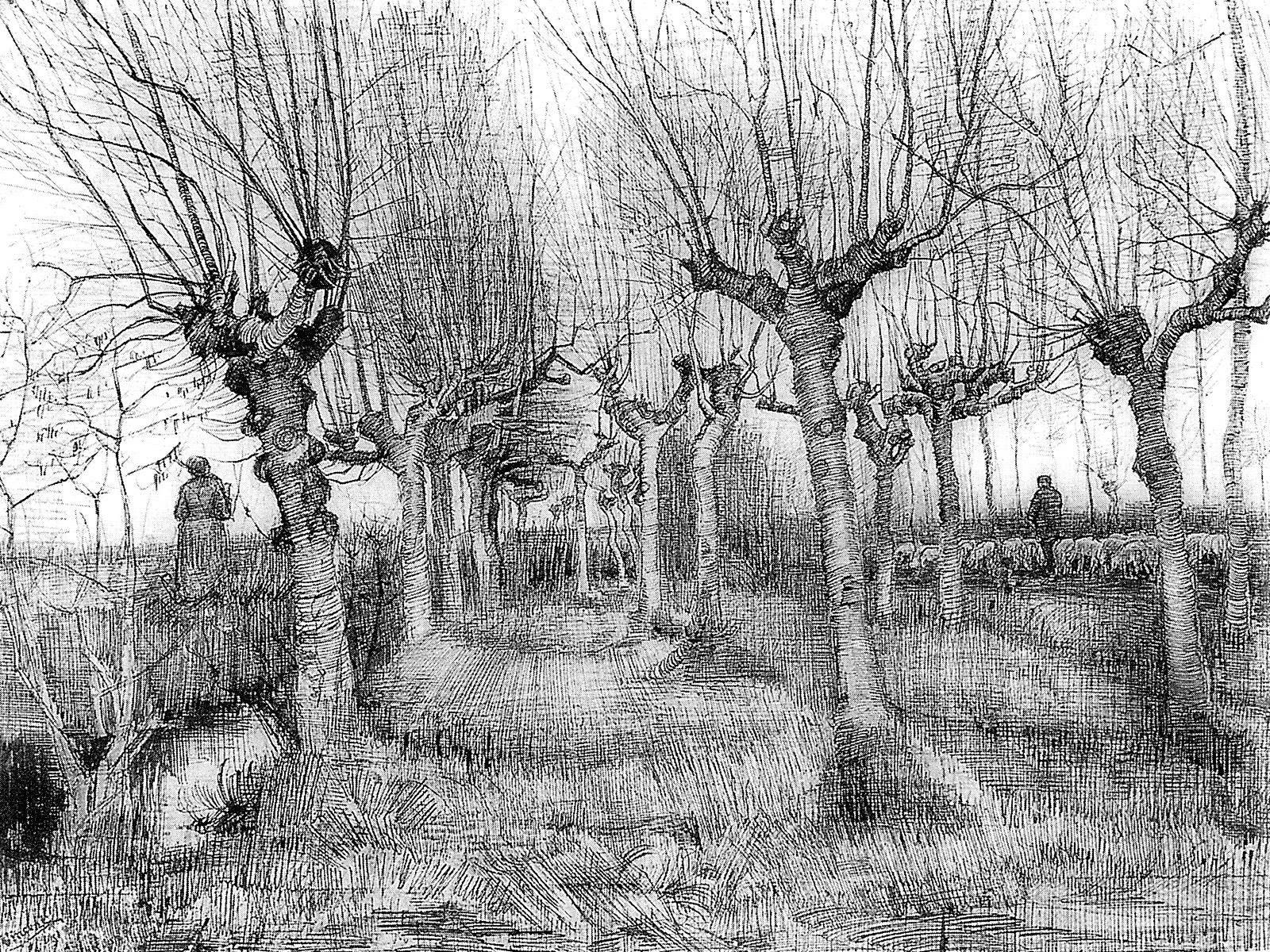 Vincent van Gogh (1853-1890) Pollard birches, 1884,  Pencil, pen in black ink, on wove paper, 39 x 54 cmVan Gogh Museum, Amsterdam