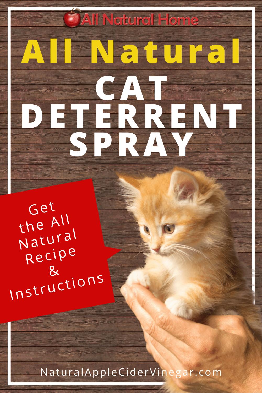 The Best All Natural Cat Deterrent Spray Recipe In 2020 Cat