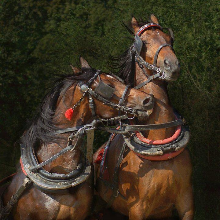 Красивые лошади, фото арабских скакунов (23)   Андалузская ...