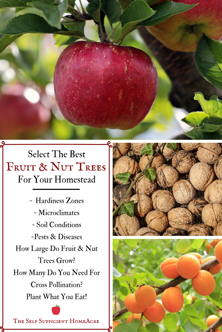 Select The Best Fruit And Nut Trees For Your Homestead The Self Sufficient Homeacre Fruit Tree Garden Small Fruit Trees Best Fruits
