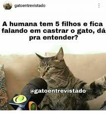 Resultado de imagem para gato entrevistado   humor   Pinterest ... 7003e3aff0