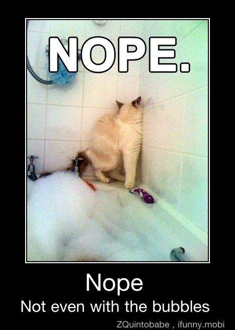 Nope Cat Animals Pinterest Gracioso Gatos And Jaja