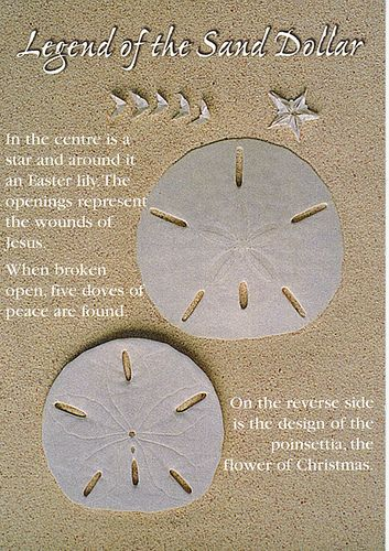 legend of the sand dollar 89 t seashore pinterest sea shells