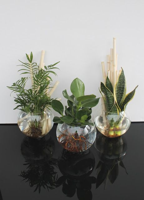 beates kreative welten hydroponics pflanzen. Black Bedroom Furniture Sets. Home Design Ideas