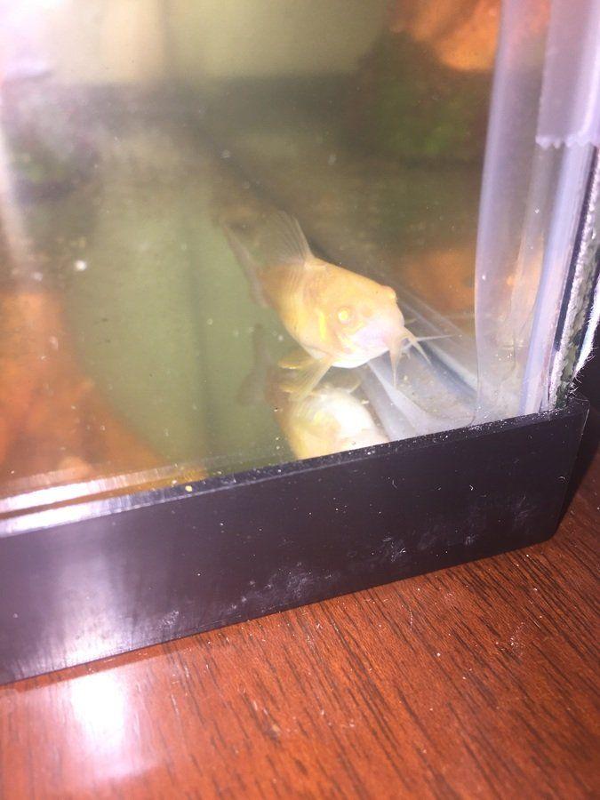 Pin On Aquarium