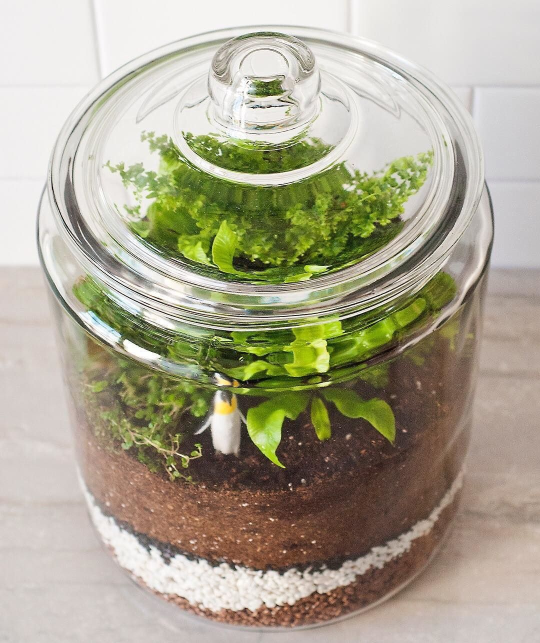 how to add humidity to home terrariums