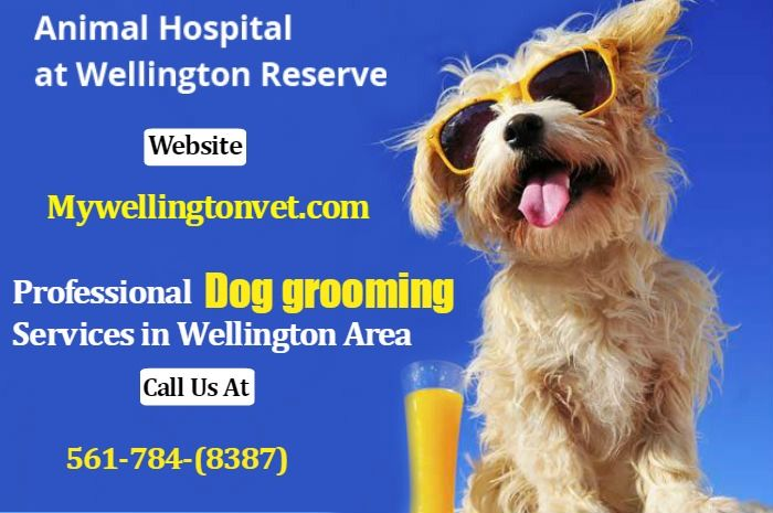 Professional Dog Grooming Services In Wellington With Images Animal Hospital Pet Clinic Dog Grooming