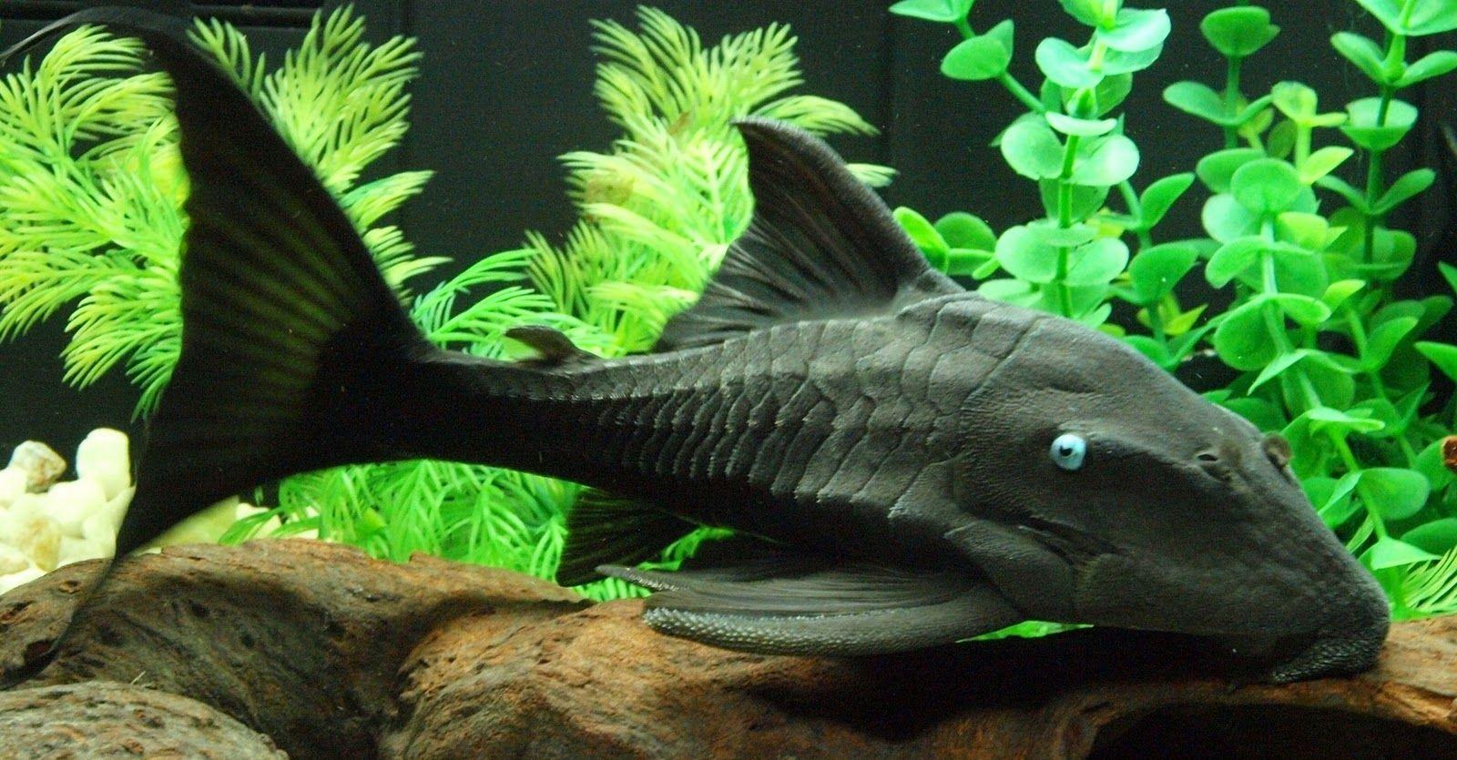 Fish aquarium information - Explore Aquarium Ideas Aquarium Fish And More