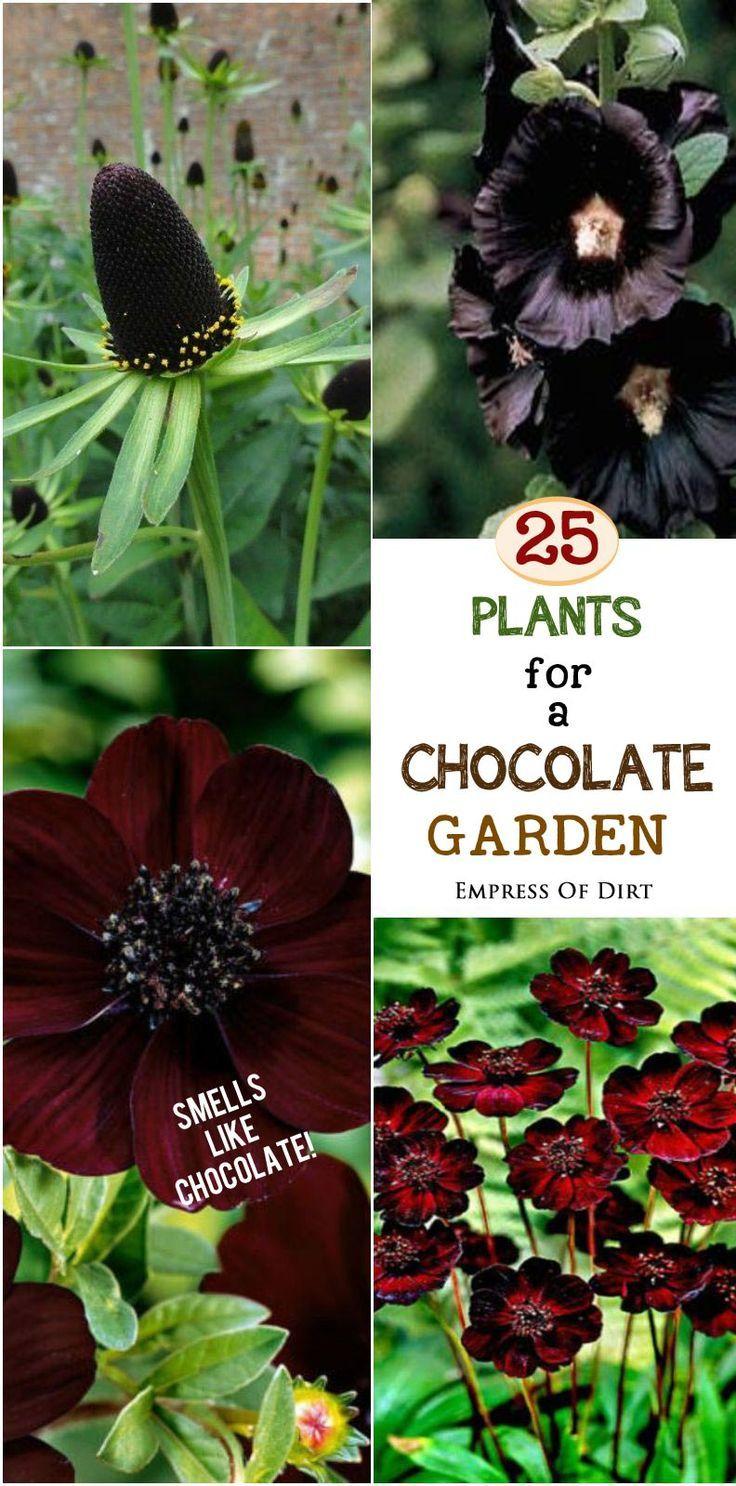 25 Plants for a Fragrant Chocolate Garden   Plants, Garden ...