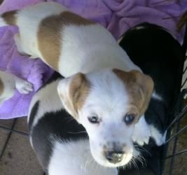 Adopt Spiegel On Hound Dog Hound Breeds Dogs