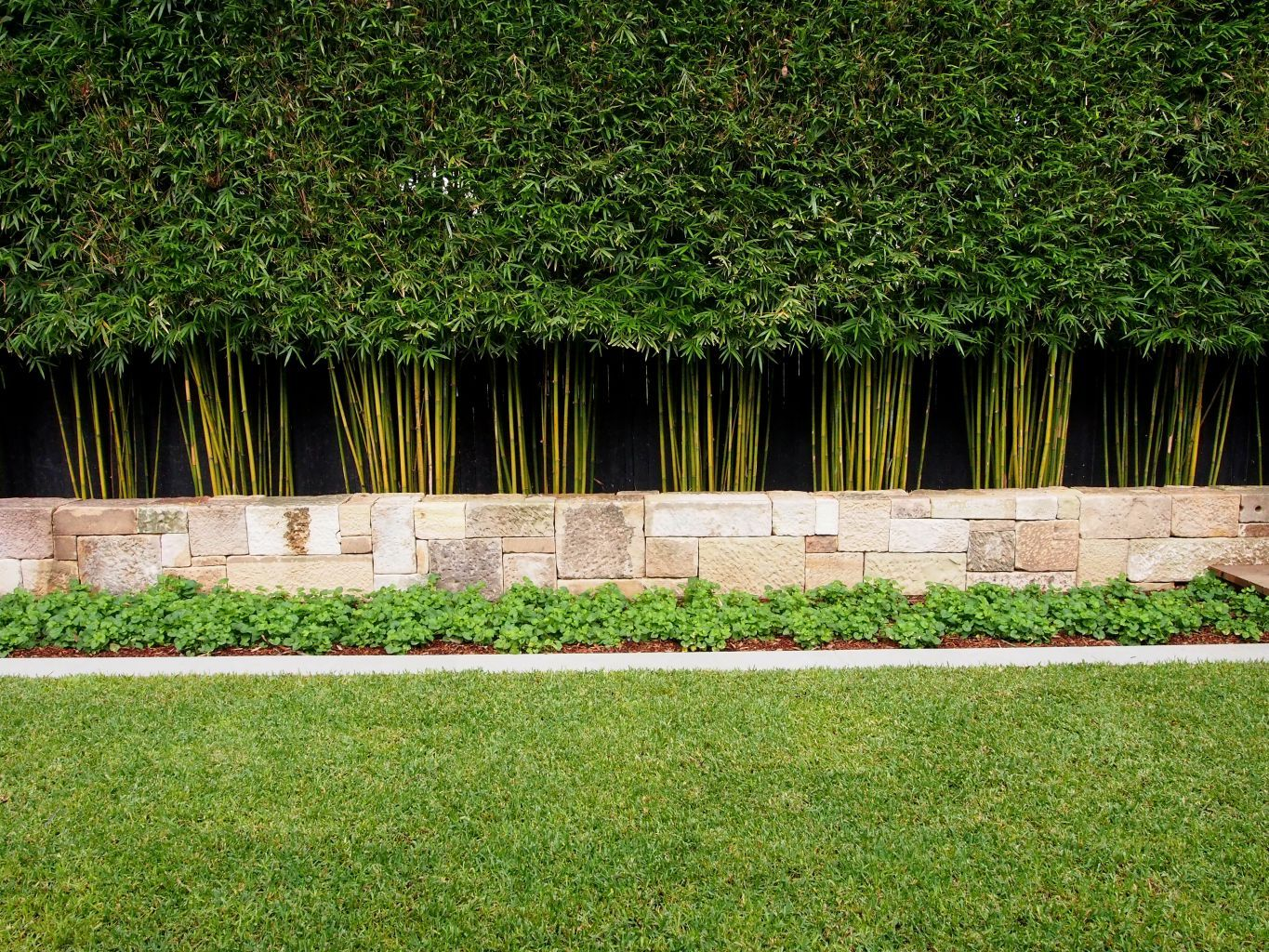 Slender weaver bamboo outsides pinterest gardens for Landscaping ideas for privacy screening