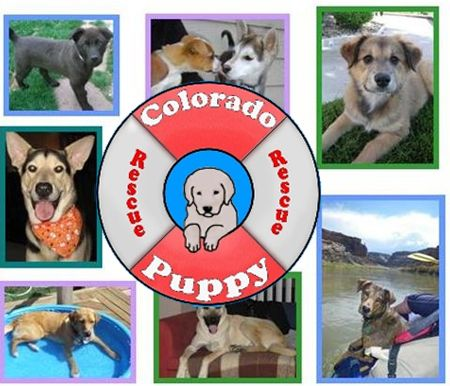 Colorado Puppy Rescue Adopted My Pup From This Rescue Hometown