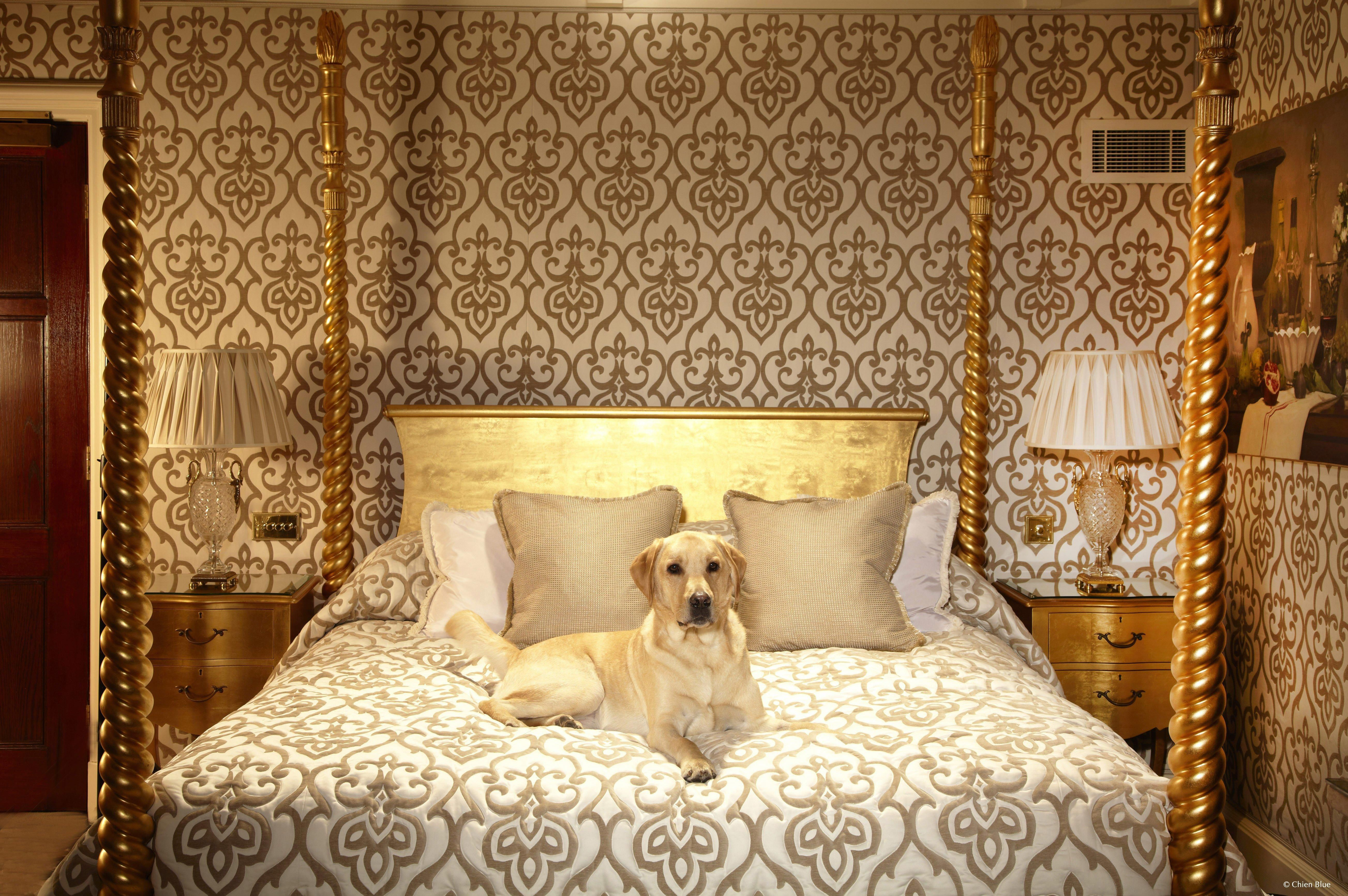 Luxury Pet Friendly Accommodation Around The World The Milestone